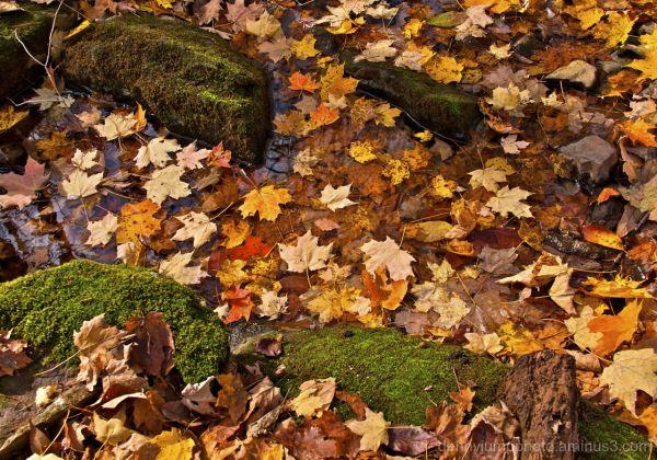 Finale   Autumn Reminiscence