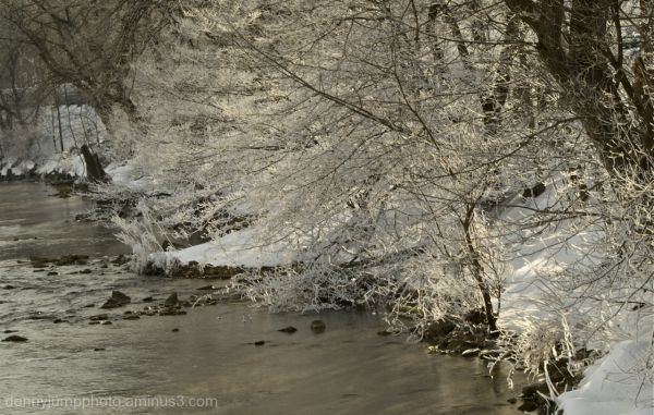Sugar Ice on Trees along Bushkill Creek