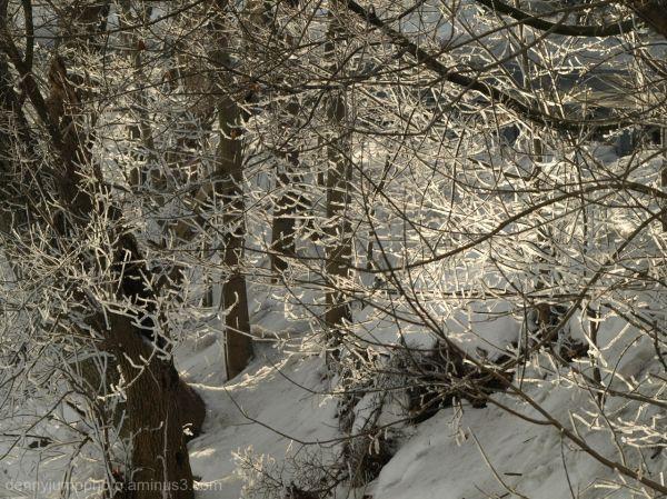 A February Morning on The Bushkill Creek