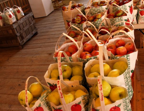 Chapin Orchards