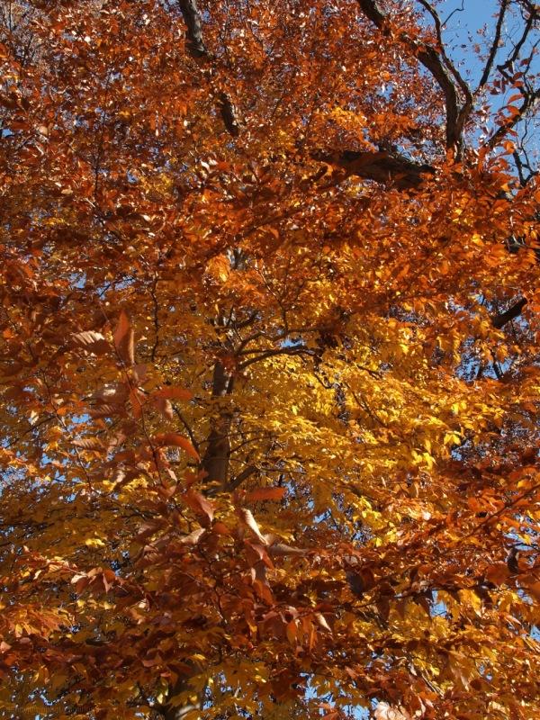 Tangerine Trees & Marmalade Skies