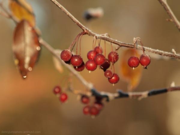 The Berries' Turn