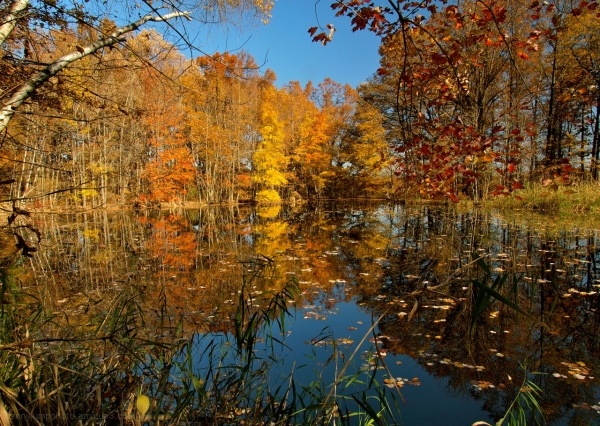 Autumn's Remembrance