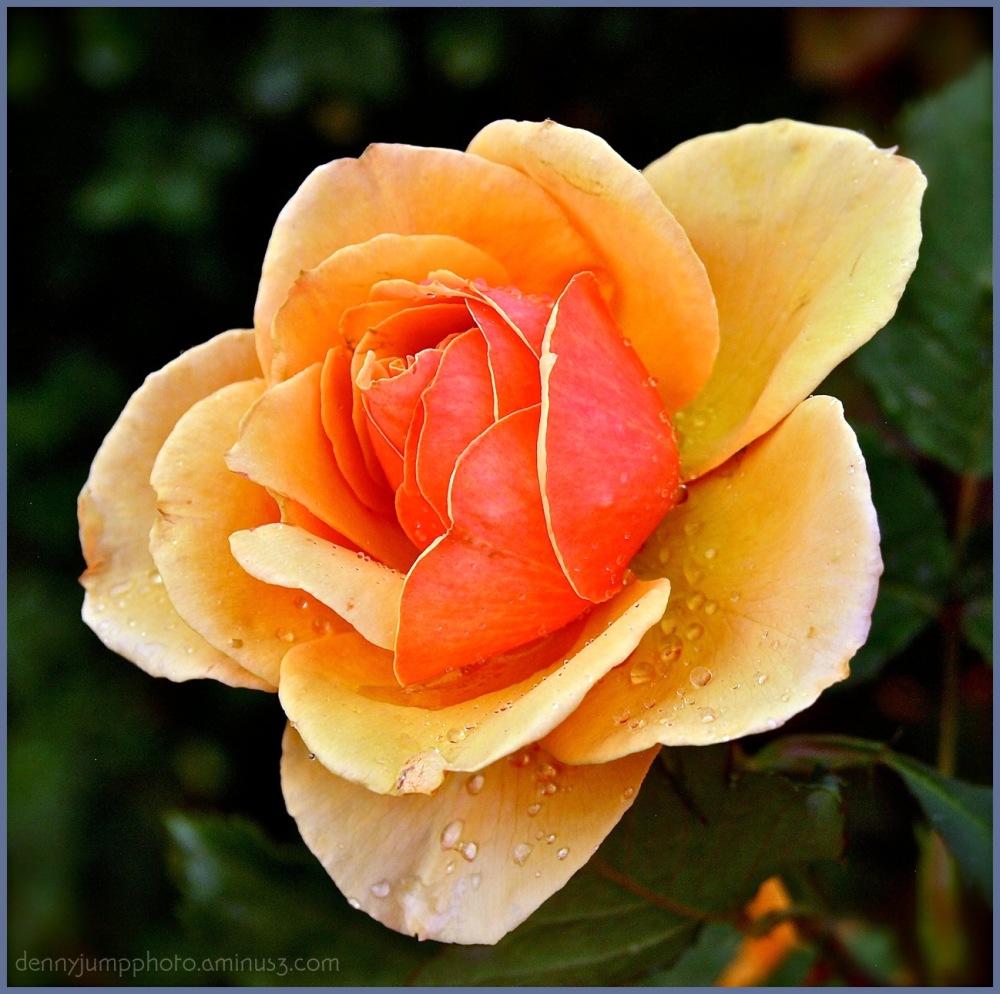 The Sun Rose