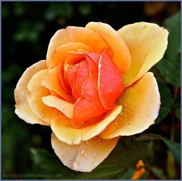"The ""Sun Rose"""