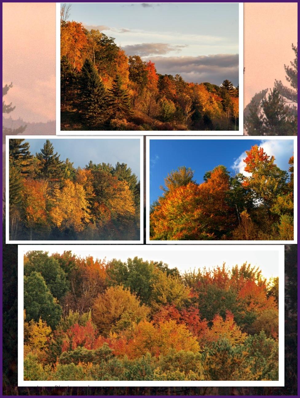 Vermont Colours