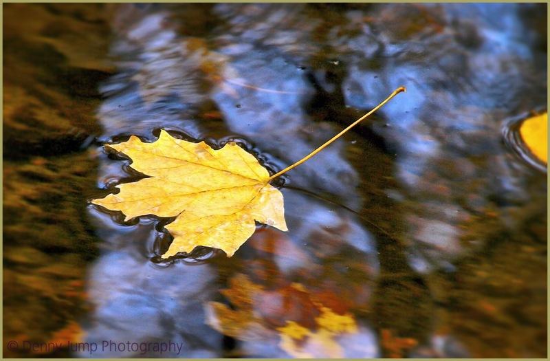 Where Floating Leaves Go
