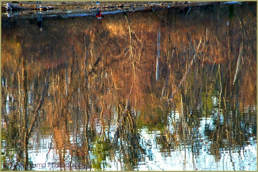 My Monet, ..