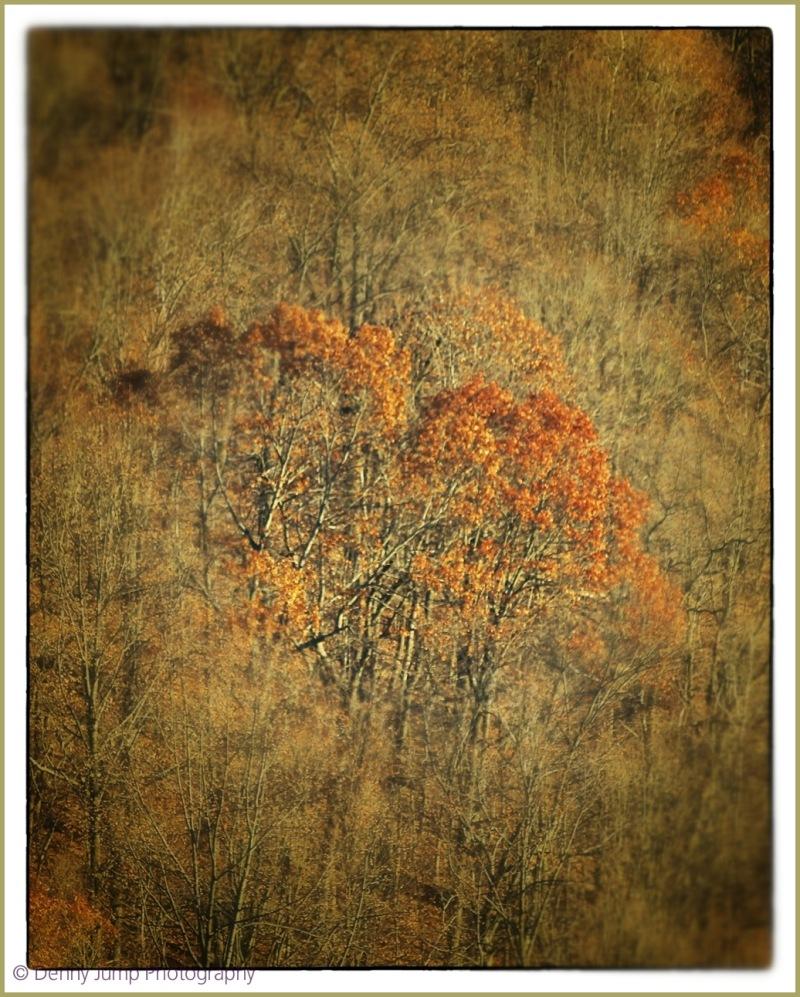 Rustic Woods
