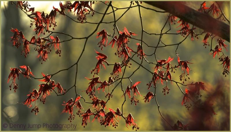 The Opposite of Autumn