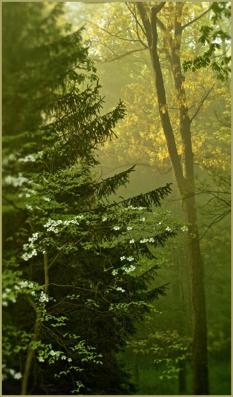 Light to Pray By