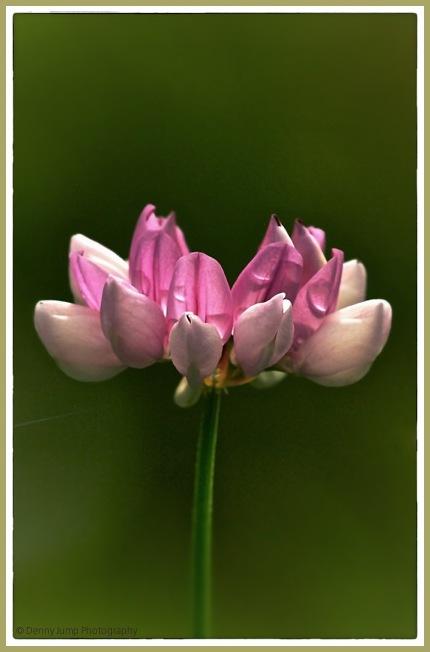 Sunday Flower