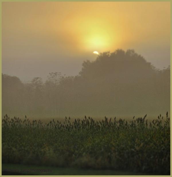 Morning walk and Sunrise