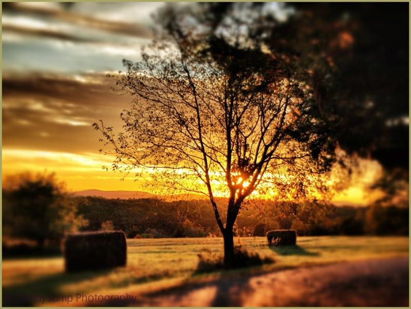 Sunrise on Foxtail Boulevard