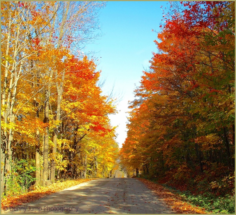 Dirt Road,Trees on Both Sides