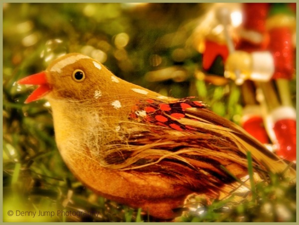 Christmas in our Tree   The Bird Sings
