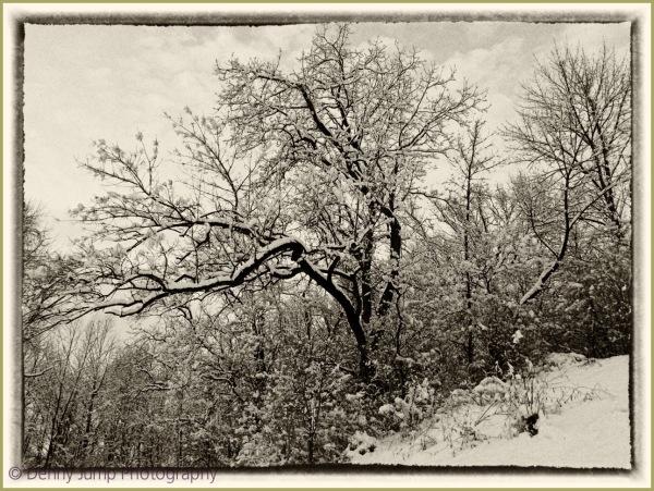 My Favorite Snow Tree