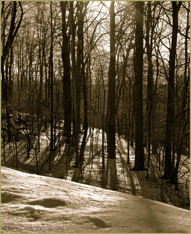 Antique Woods