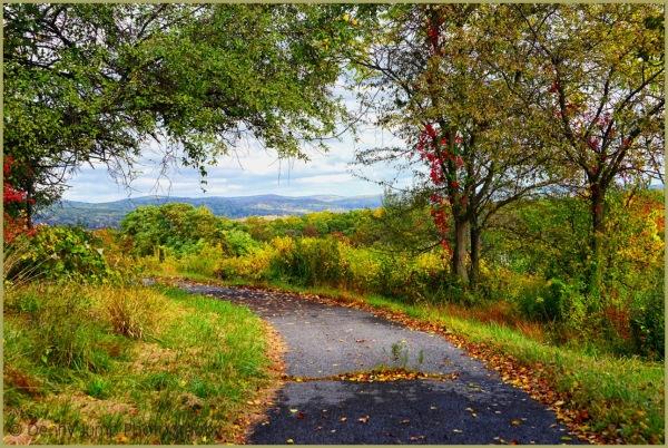 Autumn's Pathway
