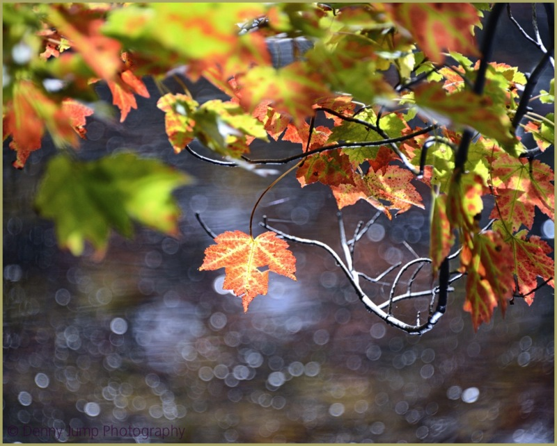 Lit Leaf