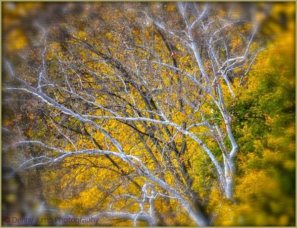 A Dream of Autumn