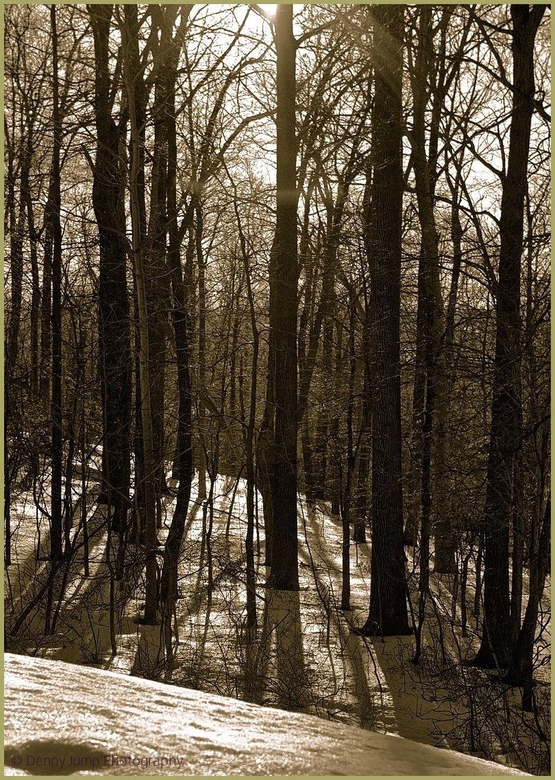 Sunset Snowy Woods