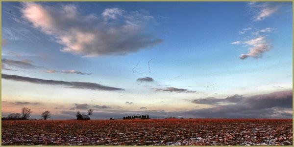 Farmland and Geese