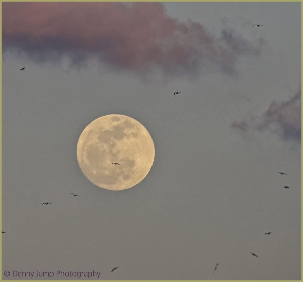 The Worm Moon arrives with a Snow Goose Escort