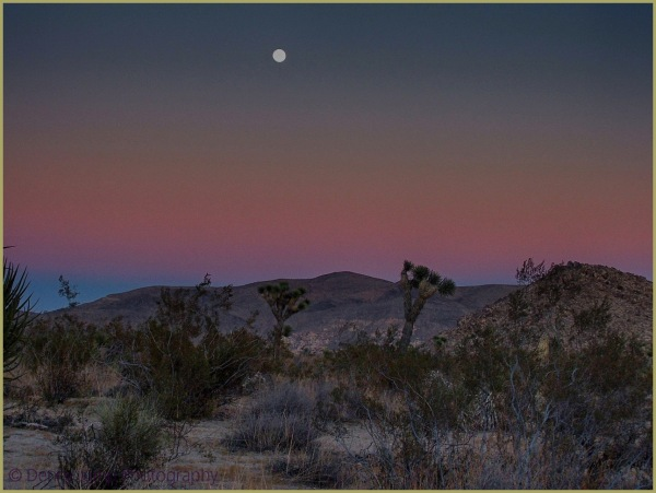 Moonlit Night at Joshua Tree NP