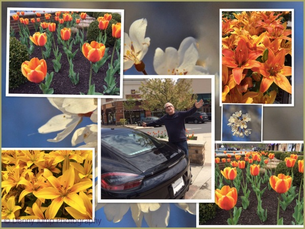 Tip Toe Thru the Tulips  With Some kind of Car