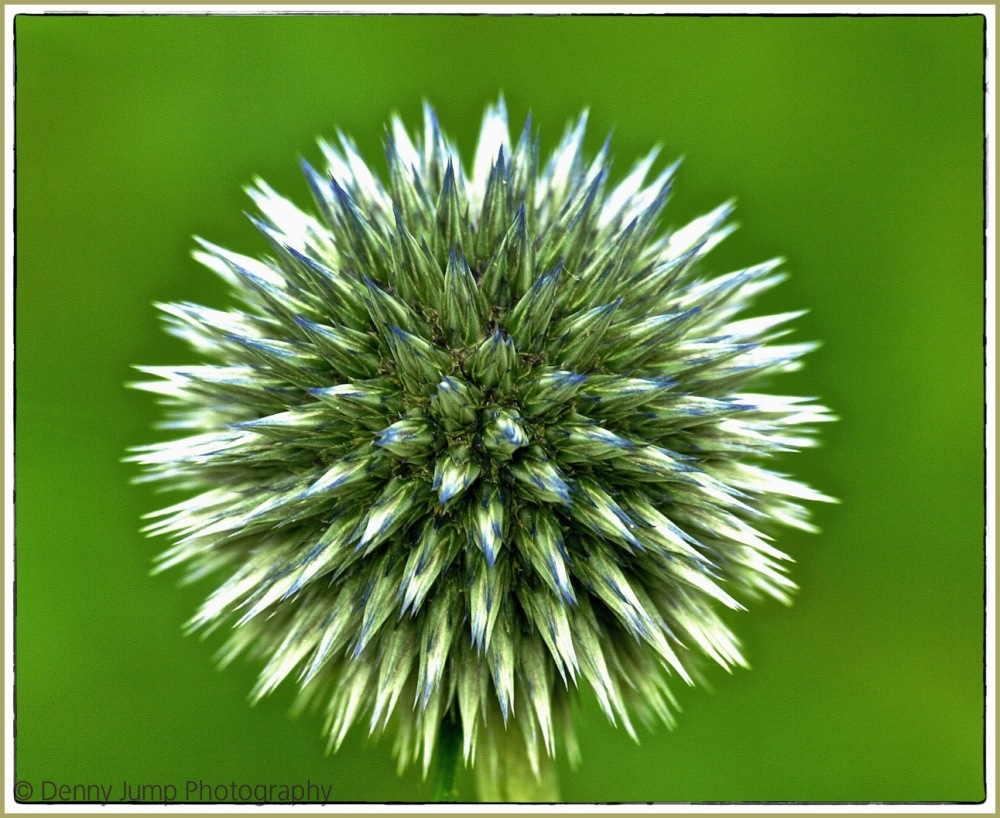 Amy's Hypnotic Plant