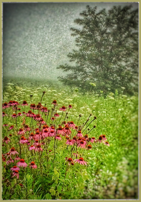 Snapseed Corn Flowers