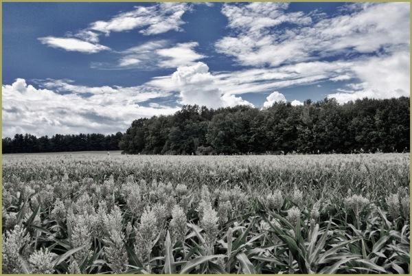 Lone Field of Dwarfs