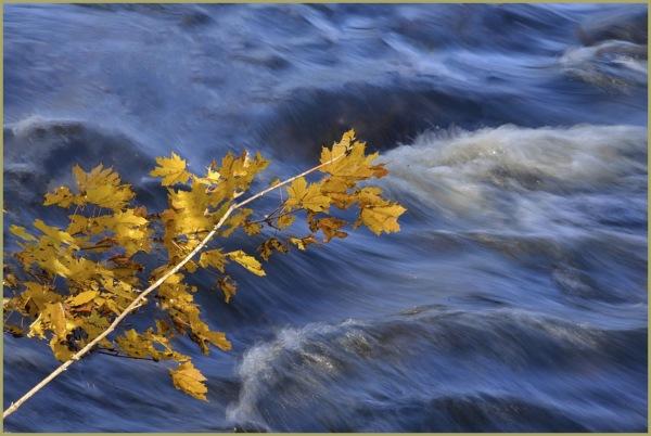 Time of the Season II   Walk along the Creek