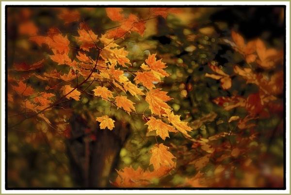 Autumn Leaves vs Hatred
