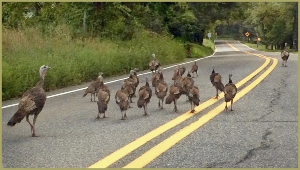 """The Turkey Trot Twenty"" On the Loose   ST"