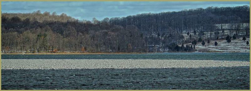 Snow Geese on Waer