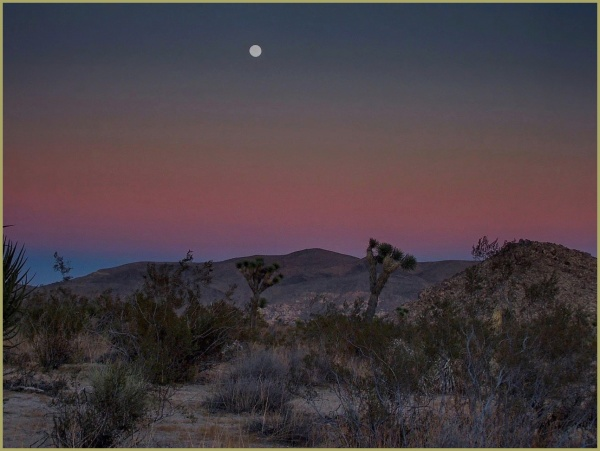 A Moonlit Night in Joshua Tree National Park