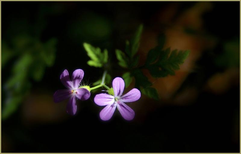 Sun Dappled Flower