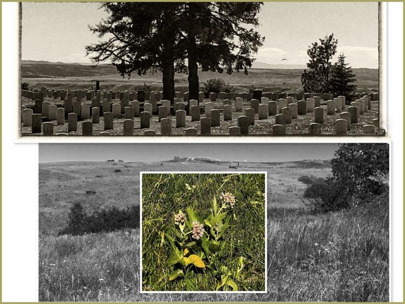 Little Bighorn - 2