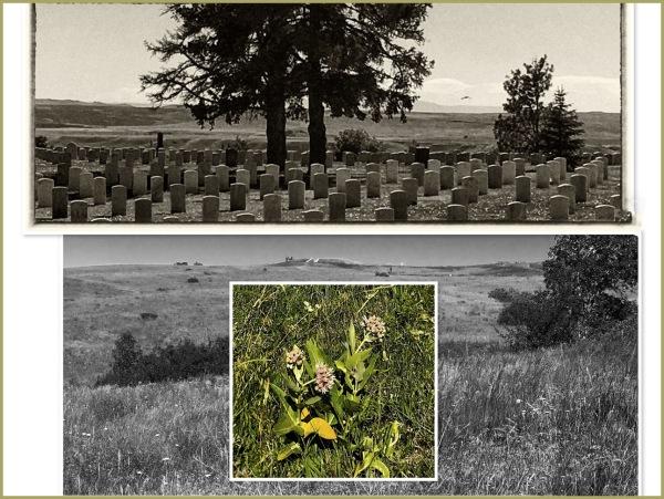 Little Bighorn Battlefield National Monument   II