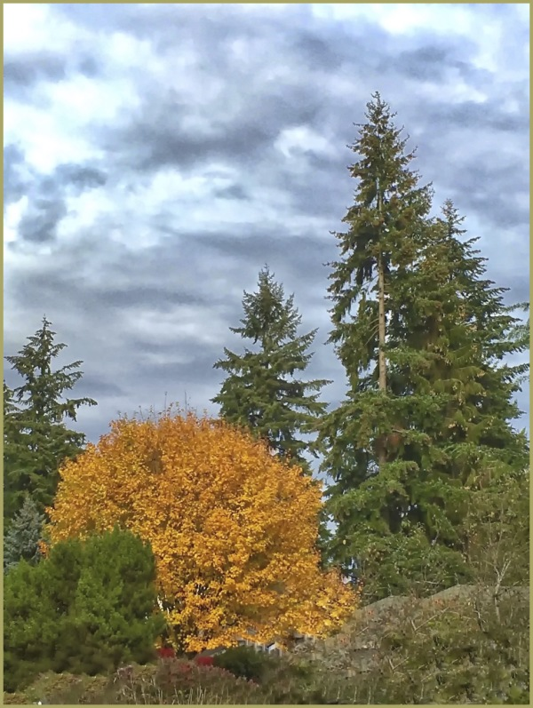 Autumn in the Pacific Northwest