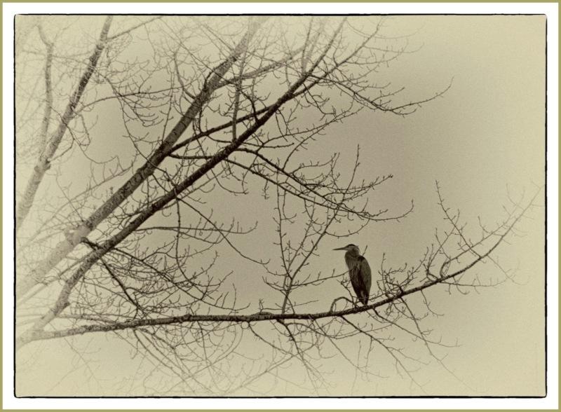 Heron Up a Tree