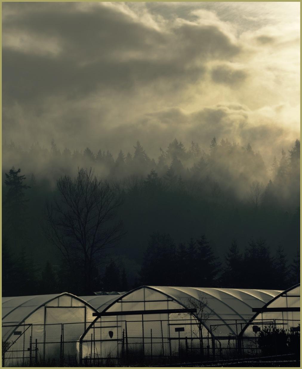 Spooky Fog Scene