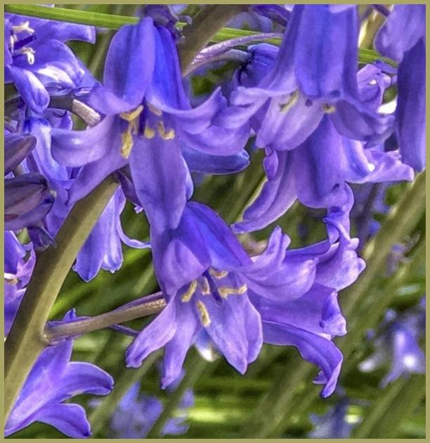 Flora-Mania