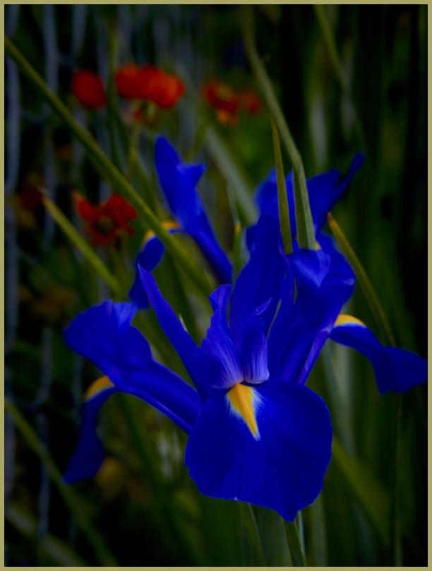 Flora Mania IV