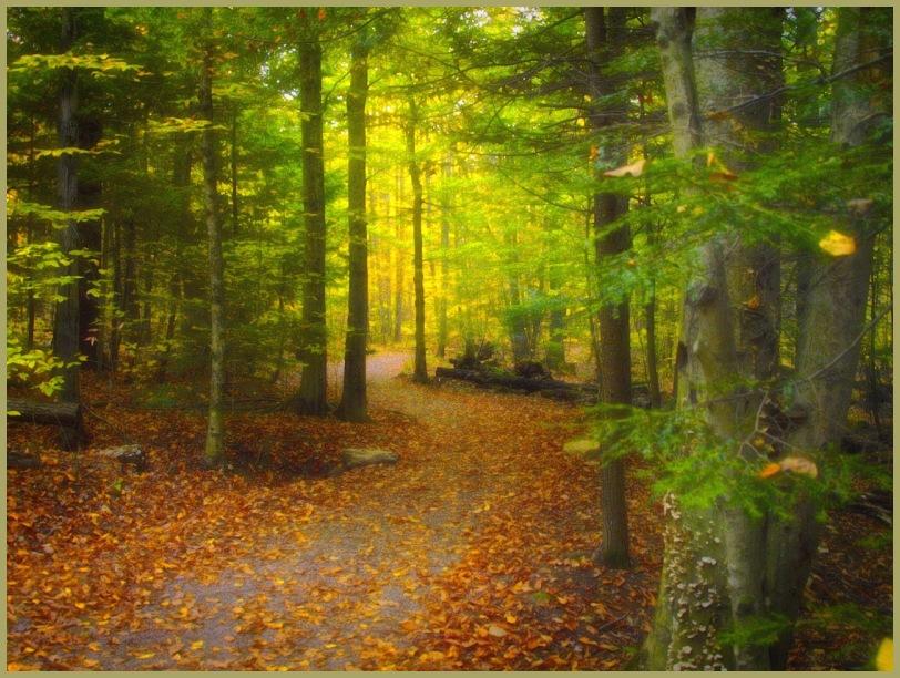 Dream Autumn