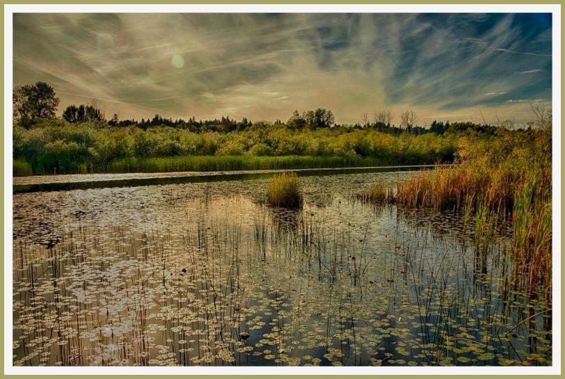 Monet Marsh