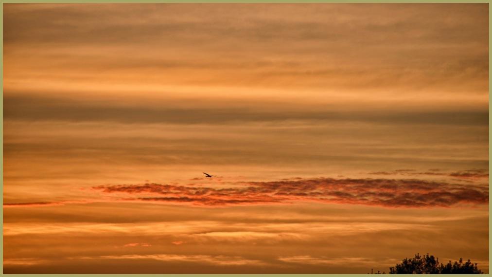 Sunrise Song Bird