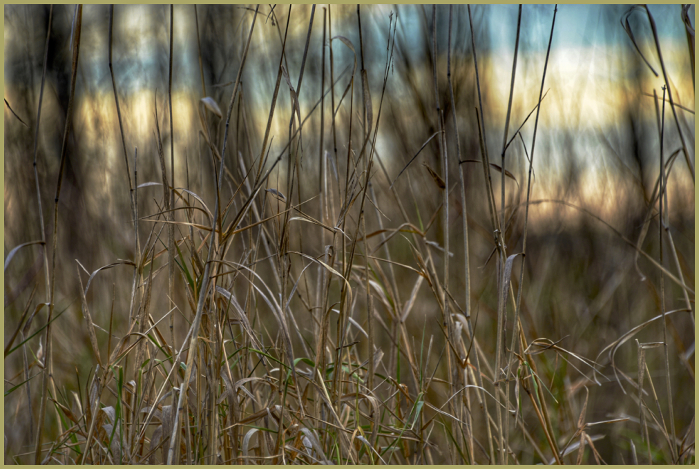 Grass Dreams
